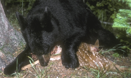 animal_protein_1